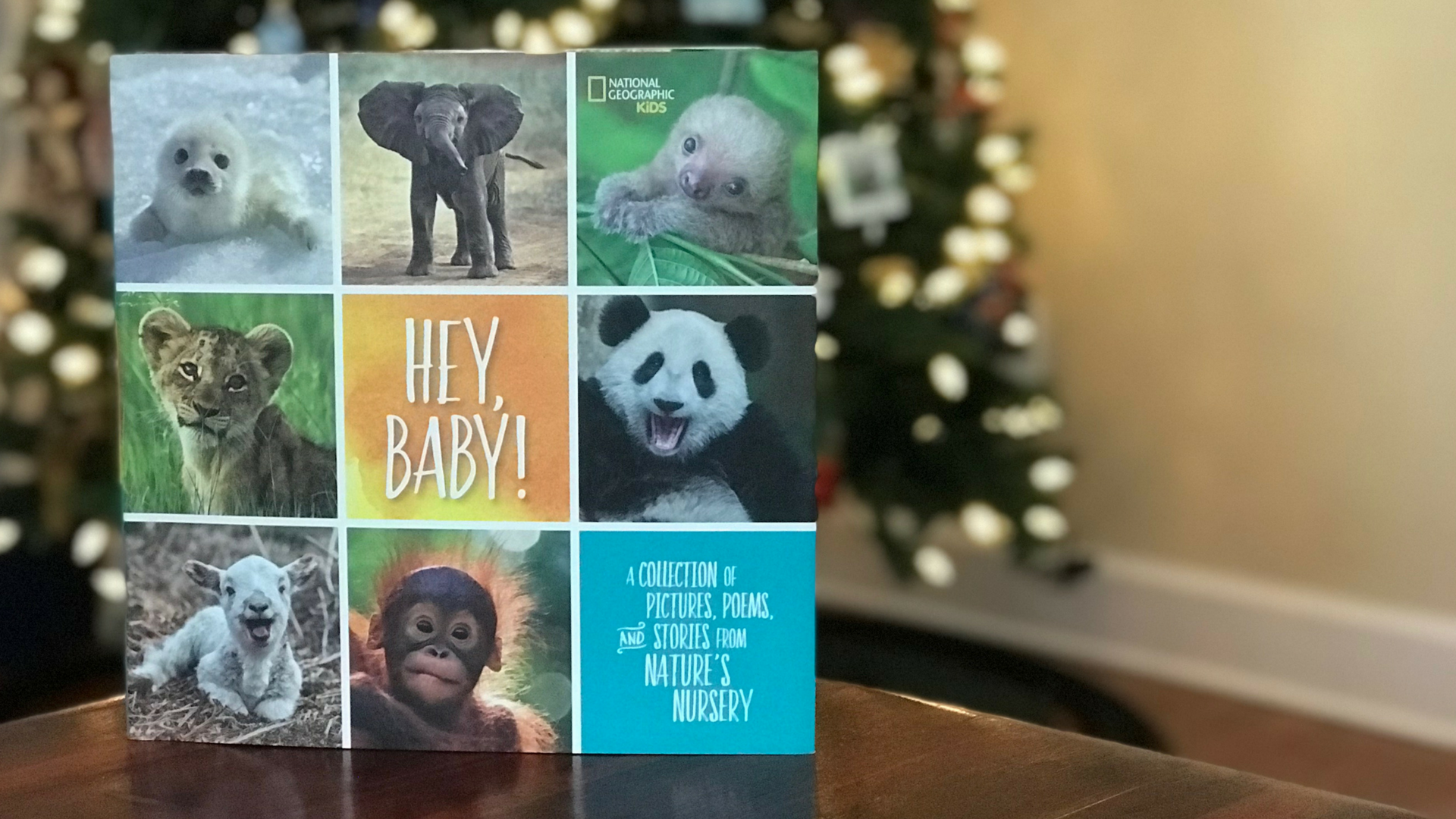 Hey Baby National Geographic Books For Kids