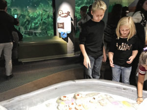 Chicago with Kids Shedd Aquarium Touch Tank