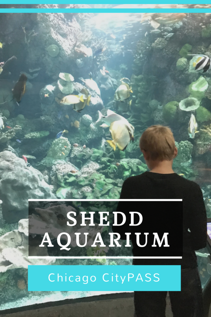 Shedd Aquarium Chicago CityPASS Chicago with Kids