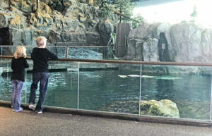 Shedd Aquarium with Kids