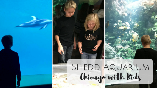 Shedd Aquarium Chicago with Kids