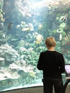 Shedd Chicago Aquarium with Kids