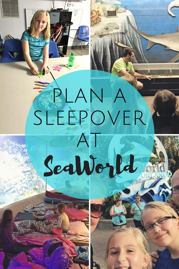 Plan a sleepover at SeaWorld for your scout troop.