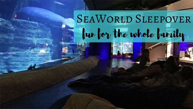 SeaWorld Educational Sleepovers - Go behind the scenes and spend the night at SeaWorld in Orlando, Florida