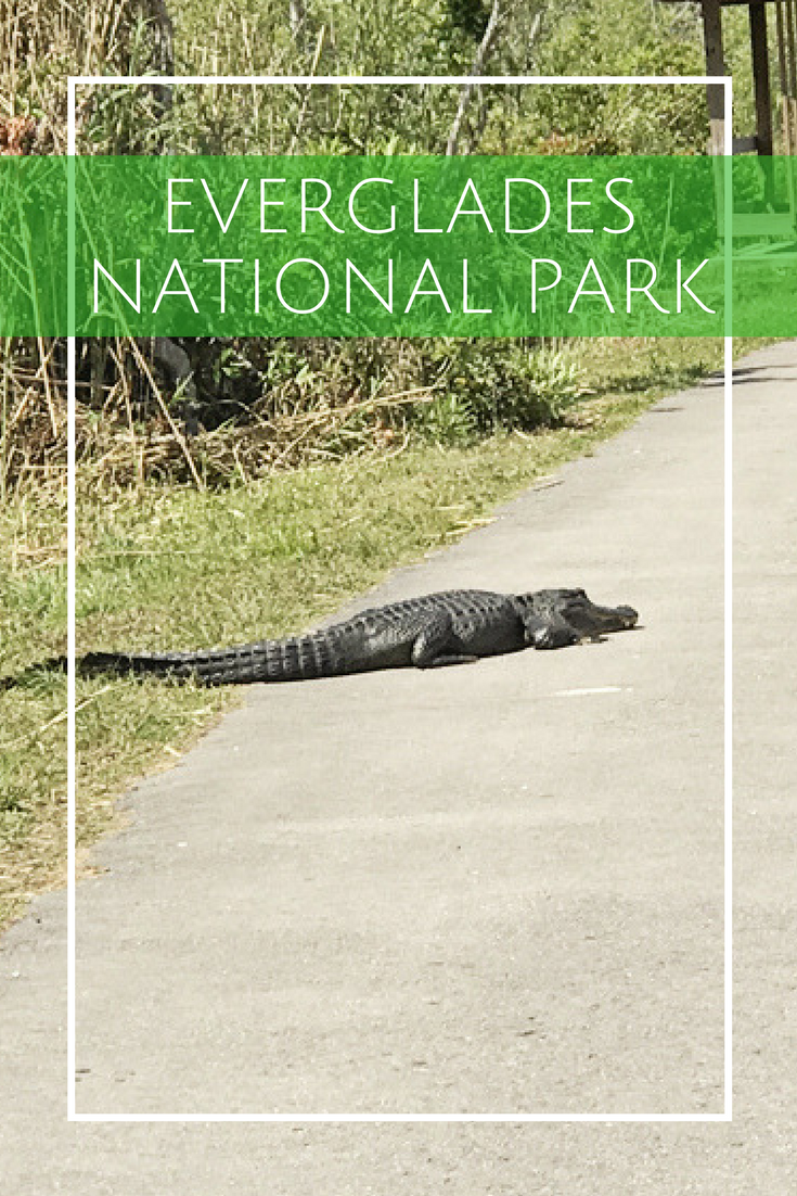 Everglades National Park Day Trip for Families with Kids