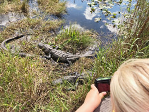 Visiting Everglades National Park with Kids.