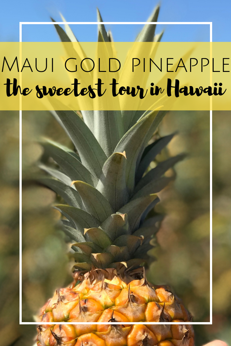 Maui Gold Pineapple Tour in Maui, Hawaii. The only pineapple tour in the United States.