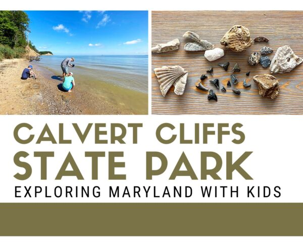 Calvert Cliffs State Park in Maryland - Perfect for Fossil Hunting